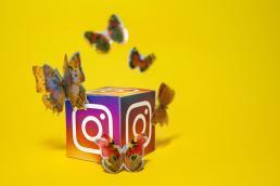 butterflies around an instagram icon